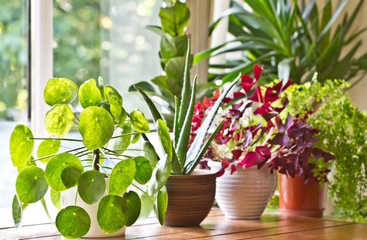 室內植物 推薦