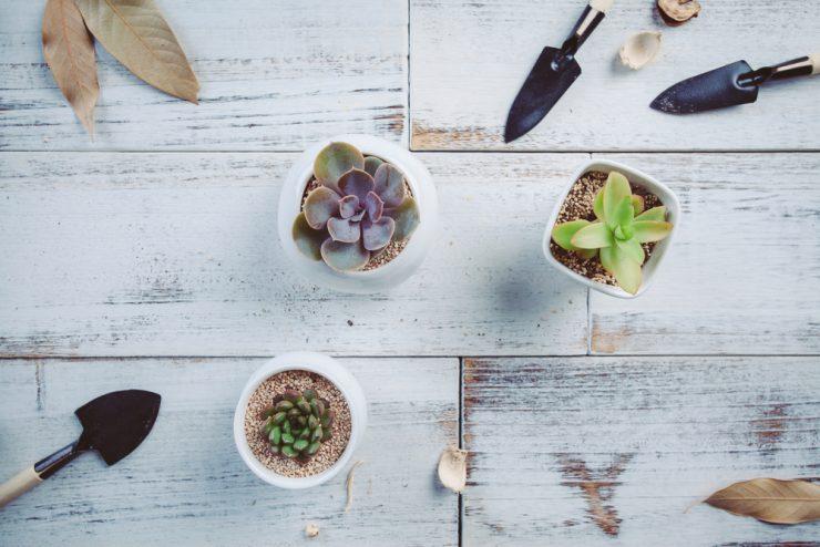 多肉植物 照顧