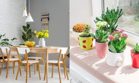 2021年精選20種室內植物人氣推薦!同場加映帶來好風水植物的5種特色!